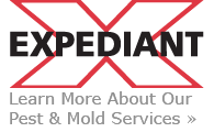 Pest Control and Mold Removal Services